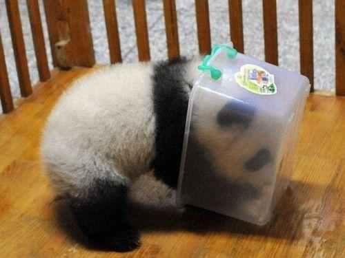 google-panda-2-5