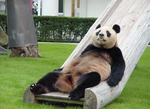 google-panda-actualizacion