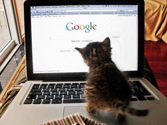 gato-google