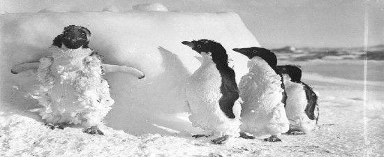 google-penguin-para-todos