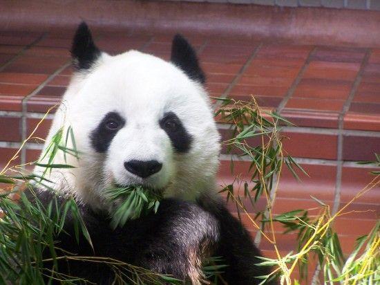 google-panda-3-7-lanzado-confirmado