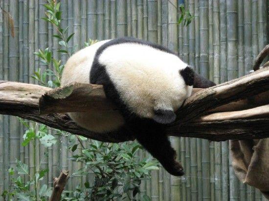 diversidad-dominios-google-panda