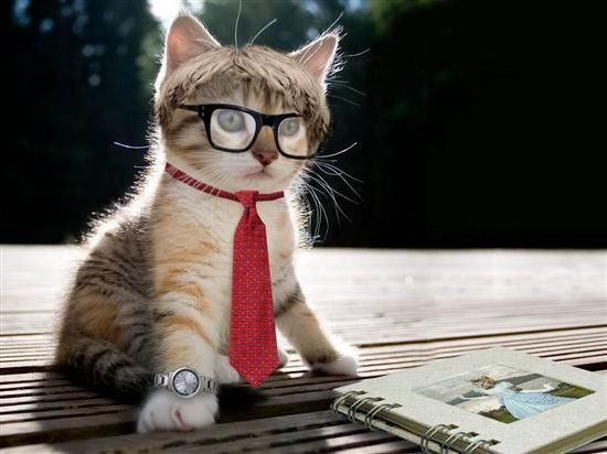 gato-en-jefe
