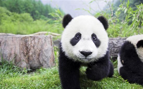 panda-21-google