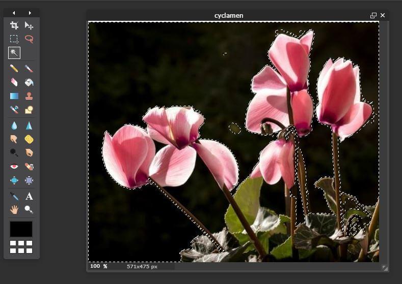 quitar-fondo-a-imagen-flor