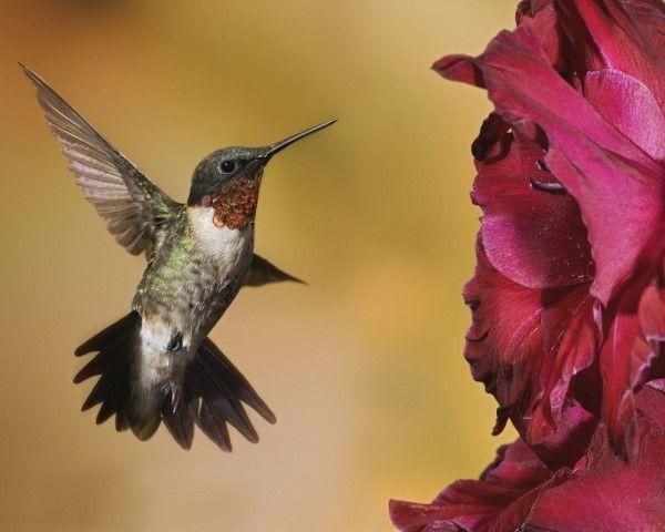 ¡Google Hummingbird entra en acción!