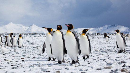 google-penguin-penalizacion