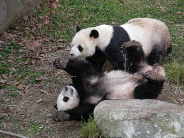 Panda 4.0: Todo lo que necesitas saber del nuevo algoritmo de Google