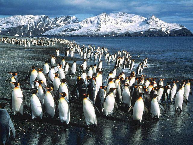 ¡Penguin 3.0 ya está lanzado!